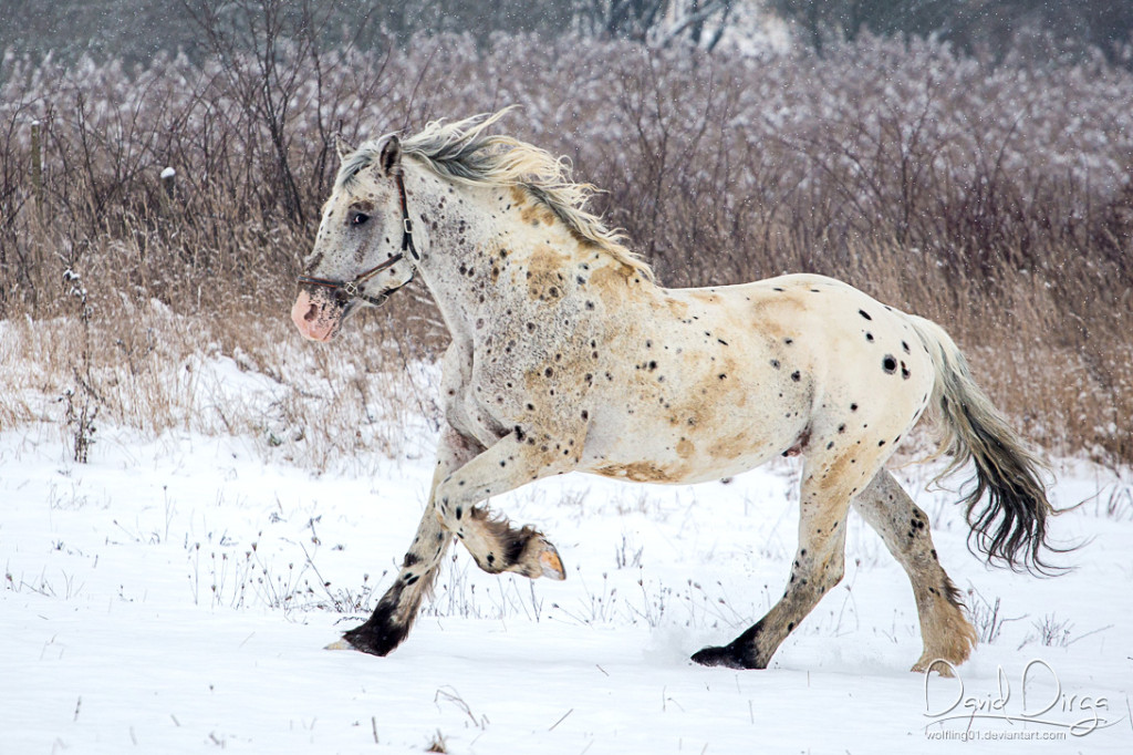 Bajaja v zimě