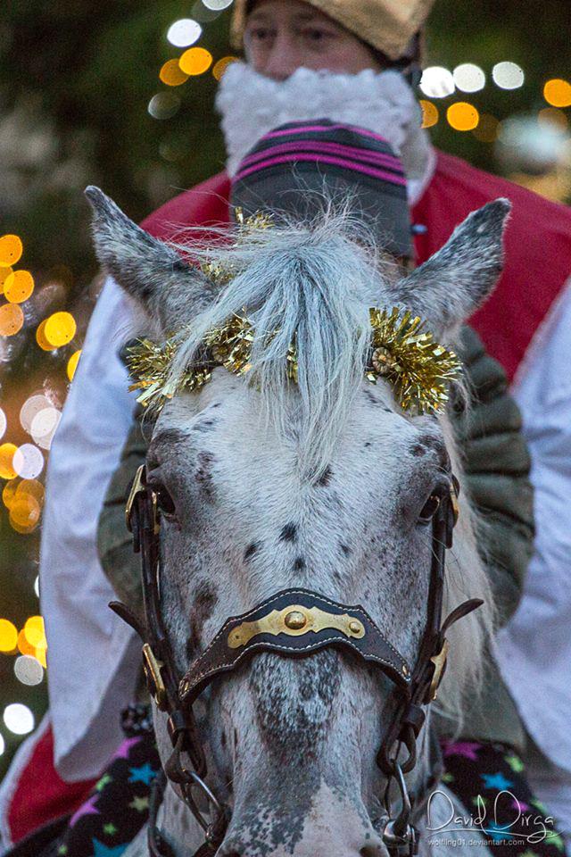 Mikuláš na koni 2015 (4)