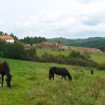 Na pastvině