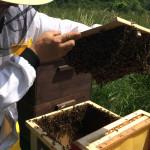 Včelaříme
