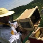 Včelaříme 2