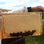Zásoby medu 2