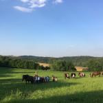 Letní jezdecký tábor 2017 (49)
